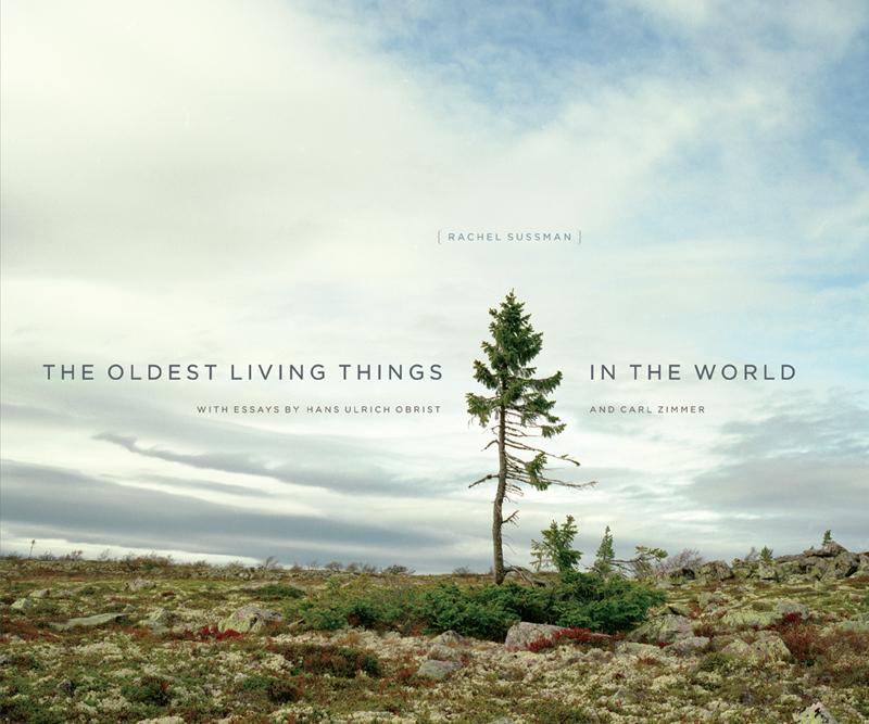A árvore que ilustra a capa do livro é um abeto de 9550 anos que vive na Suécia.