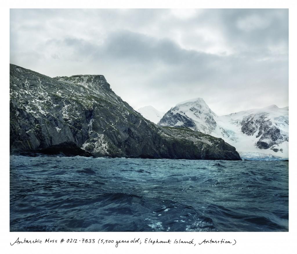 O musgo que cobre as rochas da Ilha Elefante, na Antártida, tem 5,5 mil anos.