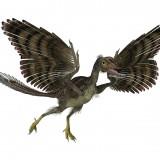 Dinossauros, aves e uma ligação de milhões de anos