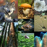 Vários critérios para classificar os seres vivos