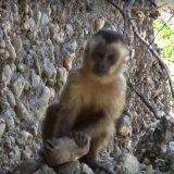 Chimpanzés e macacos chegam à Idade da Pedra