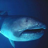 destaque-animais-oceano-profundo-opcao-3